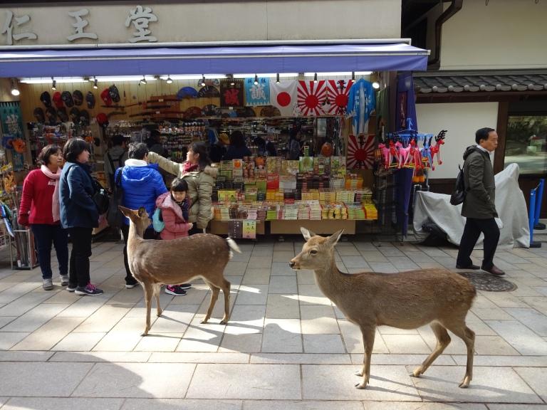 Nara_deer_shops